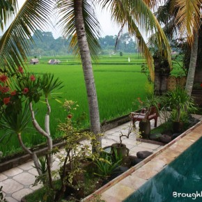 Green Field, Ubud, Bali
